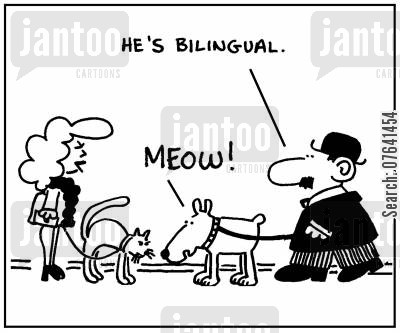 bilingual cartoon humor: 'He's bilingual.'