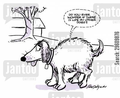 species cartoon humor: 'Do you ever wonder if there is life on other dogs?'