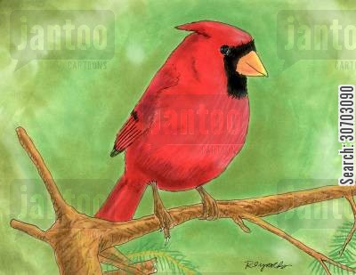 buntings cartoon humor: Red Cardinal.