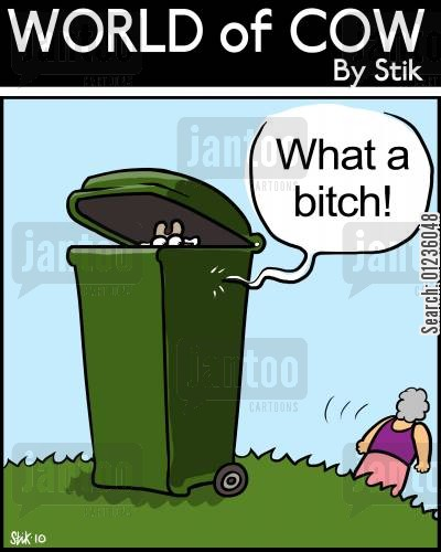 binned cat cartoon humor: What a Bitch!