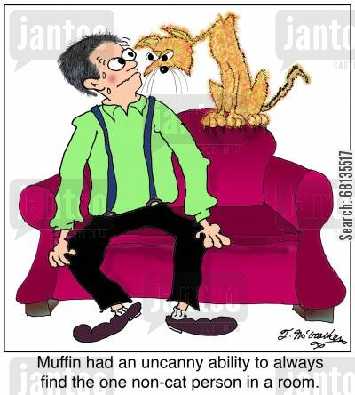 pussy cats cartoon humor: Muffin had an uncanny ability to always find the one non-cat person in a room.