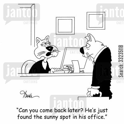sunny spot cartoon humor: 'Can you come back later? He's just found the sunny spot in his office.'