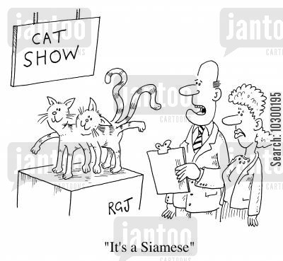 siamese cartoon humor: It's a Siamese