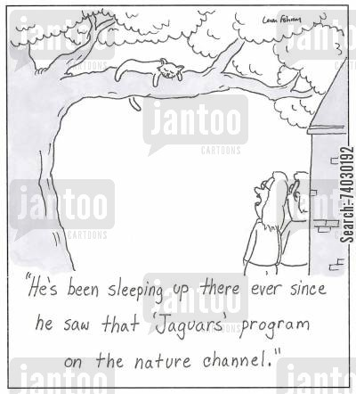 cat nap cartoon humor: 'He's been sleeping up there ever since he saw that 'Jaguars' program on the nature channel.'