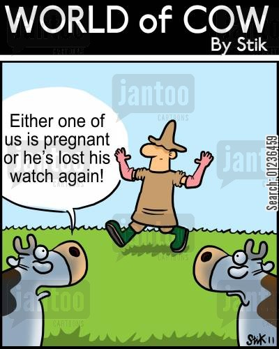 cow farm cartoon humor: Either one of us is pregnant, or he's lost his watch again!