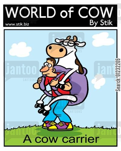 baby carrier cartoon humor: A cow carrier.