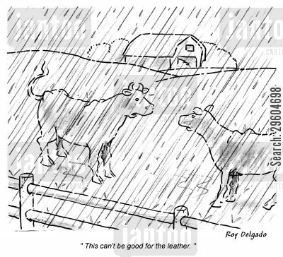 rained cartoon humor: 'This can't be good for the leather.'