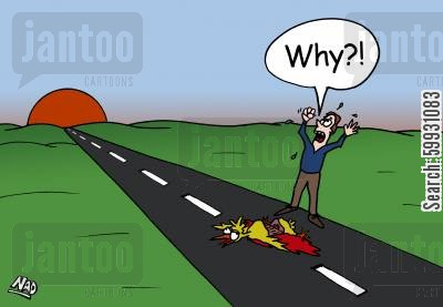 traffic collision cartoon humor: A man is standing on the road with a dead chicken in front of him shouting 'Why?!'