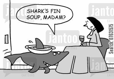 fins cartoon humor: Shark's fin soup, madam?