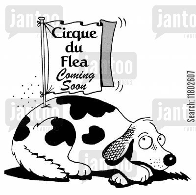 circus coming to town cartoon humor: Cirque du Flea...coming soon.