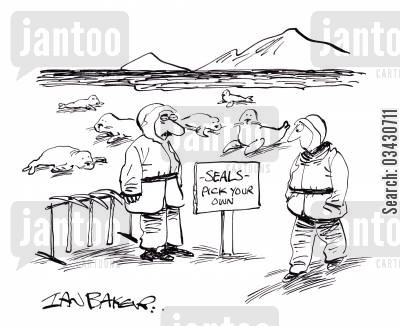seal cub cartoon humor: Seals - Pick your own.