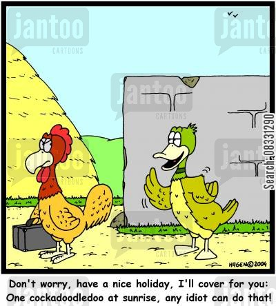roost cartoon humor: Don't worry, have a nice holiday, I'll cover for you: One cockadoodledoo at sunrise, any idiot can do that!