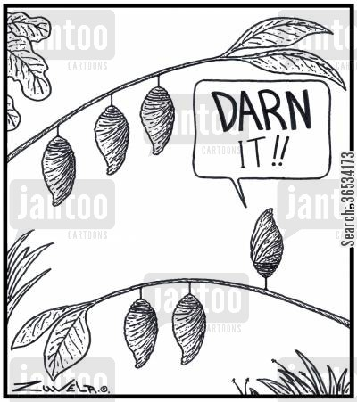 moth cartoon humor: Pupa: 'DARN It!!'