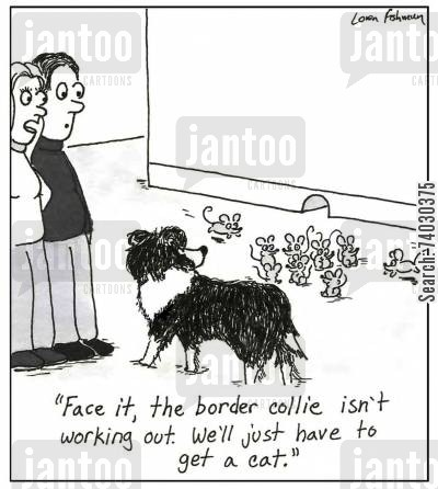 mouser cartoon humor: 'Face it, the border collie isn't working out. We'll just have to get a cat.'