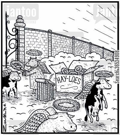 haloes cartoon humor:  Hay-loes