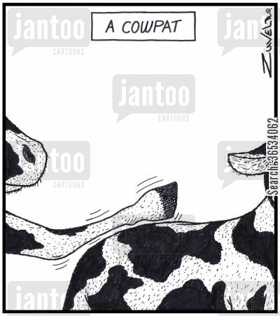 hooves cartoon humor: A Cowpat A cow patting another cow