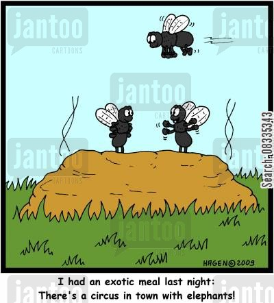 elephant dung cartoon humor: 'I had an exotic meal last night: There's a circus in town with elephants!'