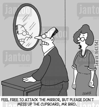 bird attack cartoon humor: 'Feel free to attack the mirror, but please, don't mess up the cupboard again, Mr Bird.'