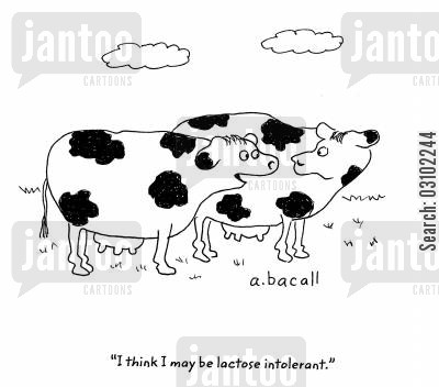 lactose cartoon humor: 'I think I may be lactose intolerant.'