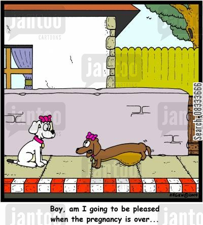 pedigree dogs cartoon humor: 'Boy, am I going to be pleased when the pregnancy is over...'