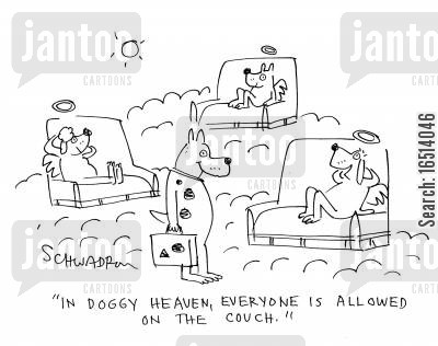 afterlife cartoon humor: 'In doggy heaven, everyone is allowed on the couch.'