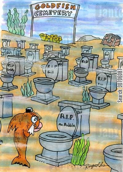 flushed cartoon humor: Goldfish Cemetery.