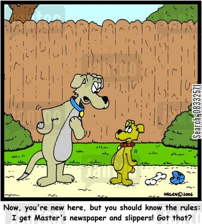 top dog cartoon humor: 'Now, you're new here, but you should know the rules: I get Master's newspaper and slippers! Got that?'