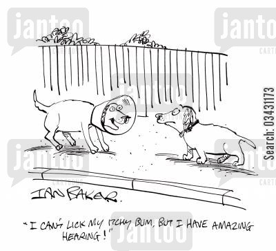 itching cartoon humor: 'I can't lick my itchy bum, but I have amazing hearing!'