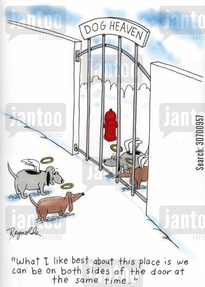 staying inside cartoon humor: Dog Heaven: 'What I like best about this place is we can be on both sides of the door at the same time.'