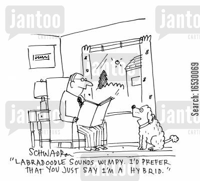 pedigrees cartoon humor: 'Labradoodle sounds wimpy, I'd rather that you just say I'm a hybrid.'