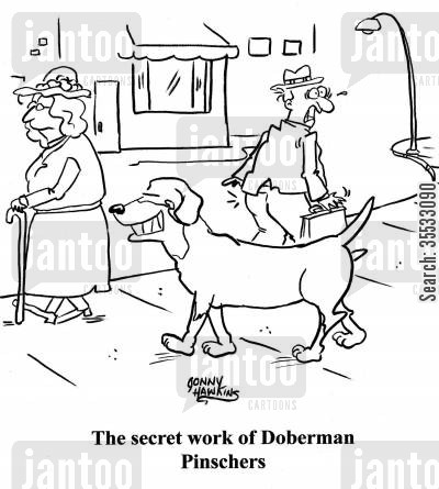 dog habits cartoon humor: Man reacts to being goosed. Caption: The secret work of Doberman Pinschers