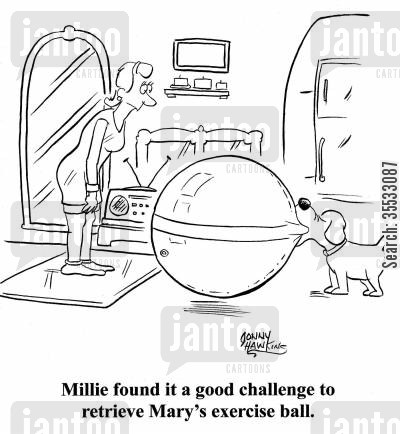 fetching balls cartoon humor: Millie found it a good challenge to retrieve Mary's exercise ball.