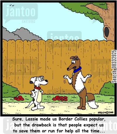 lassie cartoon humor: 'sure, Lassie made us Border Collies popular, but the drawback is that people expect us to save them or run for help all the time...'