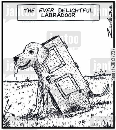 labrador cartoon humor: The ever delightful Labradoor.