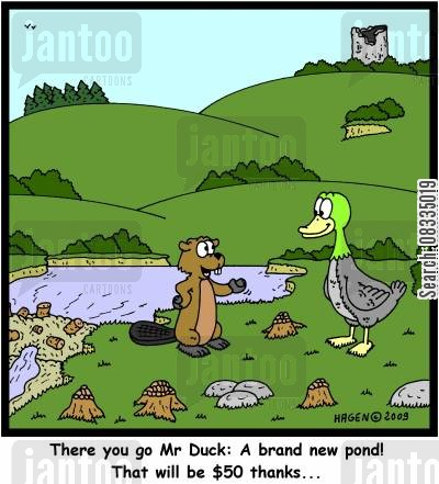 swim cartoon humor: 'There you go Mr Duck: A brand new pond! That will be $50 thanks...'
