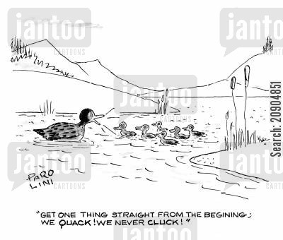 duck pond cartoon humor: 'Get one thing straight from the beginning; we quack! We never cluck!'