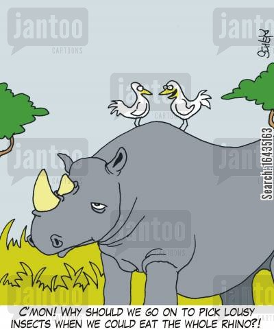 tick birds cartoon humor: 'C'mon! Why should we go on to pick lousy insects when we could eat the whole Rhino?!'