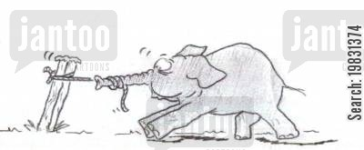 trunks cartoon humor: Baby elephant tug of war.