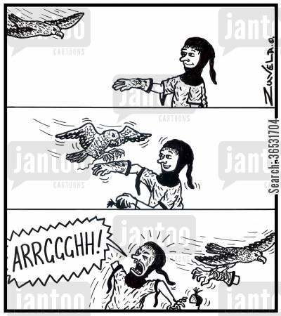 falcons cartoon humor: Aa falconer looses his arm to his peregrine falcon.