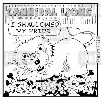 famous saying cartoon humor: Cannibal lions - 'I swallowed my pride.'