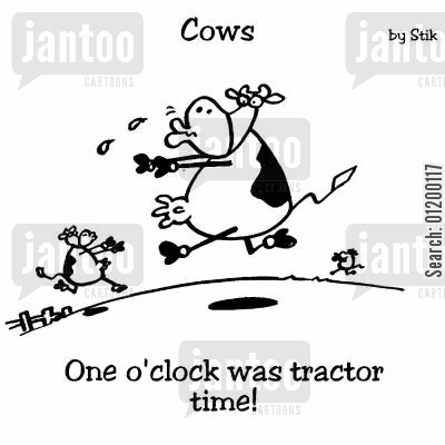 hungary cartoon humor: COWS: One o'clock was tractor time!