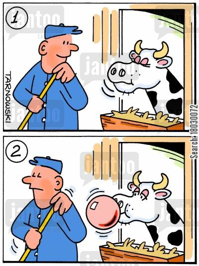 dairies cartoon humor: Cow chewing bubble gum.