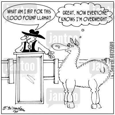auctioneer cartoon humor:  'What am I bid for this 1,000 pound llama?' The llama thinks; 'Great. Now EVERYONE knows I'm overweight.'