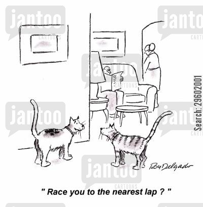 cat napping cartoon humor: 'Race you to the nearest lap?'