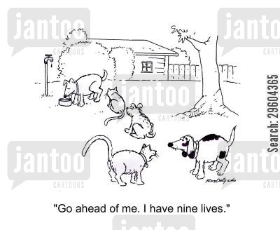 que cartoon humor: 'Go ahead of me. I have nine lives.'