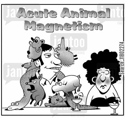 animal attraction cartoon humor: Acute Animal Magnetism.