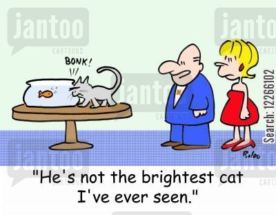 not the brightest cartoon humor: BONK!, 'He's not the brightest cat I've ever seen.'