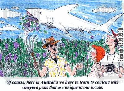 jaws cartoon humor: 'Of course, here in Australia we have to learn to contend with vineyard pests that are unique to our locale.'