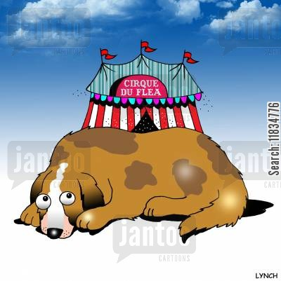 flea circuses cartoon humor: Cirque Du Flea