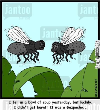 fly soup cartoon humor: 'I fell in a bowl of soup yesterday, but luckily, I didn't get burnt: It was a Gazpacho...'